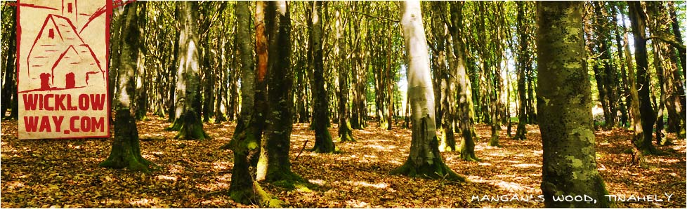 Mangan's Wood, Tinahely, County Wicklow